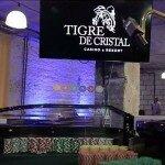 Tigre de Cristal будет сотрудничать с казино Kangwon Land